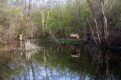 Waterfowl siedlisko Obrazy Royalty Free