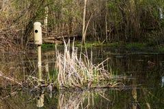 Waterfowl siedlisko Zdjęcia Stock