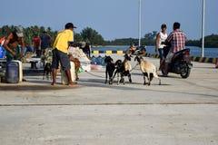 Mężczyzna handlują w szerokiej rozmaitości sprzedaże przy Sebesi dokami w Lampung, w Indonezja zdjęcia royalty free