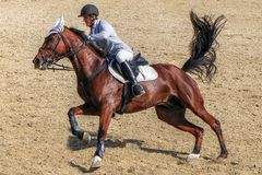 Mężczyzna horseback jazda na galopującym brown koniu Zdjęcia Stock