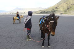 Mężczyzna i koń Fotografia Royalty Free