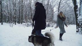 Mężczyzna i kobiety odprowadzenie z husky trzyma one na smycz przepustce each inny w zima śnieżystym parku Psy dalej zbiory