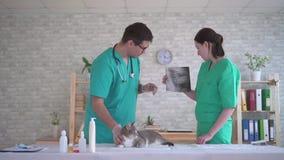 Mężczyzna i kobiety weterynarzi, dyskutuje promieniowanie rentgenowskie zwierzę zbiory