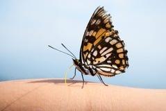 Mężczyzna i natura: motyl na ręce mężczyzna zdjęcie stock