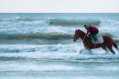 Mężczyzna jazda na brązu galopującym koniu w wodach morskich Ayia Erini plaża w Cypr przeciw szorstkiemu morzu zdjęcie royalty free