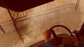 Mężczyzna jeżdżenia średniorolny syndykat zbiera na polu z pszenicznym widokiem od syndykata salonu widoku stylu życia od pierwsz zdjęcie wideo