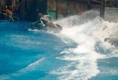 Mężczyzna jedzie dżetowego narciarskiego zwrot opuszczali akcję na wodzie obrazy royalty free