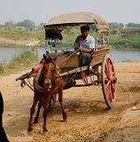 Mężczyzna jedzie końską furę w Innwa, Myanmar Zdjęcia Royalty Free
