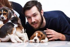 Mężczyzna, kobieta i duża grupa beagle szczeniaki, Zdjęcia Royalty Free