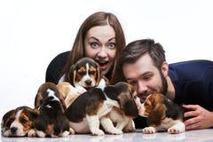 Mężczyzna, kobieta i duża grupa beagle szczeniaki, Obrazy Stock