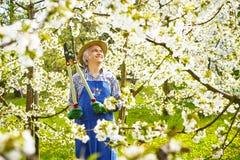 Mężczyzna kwiatu czereśniowy fartuch i słomiany kapelusz zdjęcia royalty free