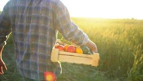Mężczyzna mienia średniorolny pudełko organicznie warzywa w zmierzchu polu: marchewki, grule, zucchini, pomidory średniorolny ` s zdjęcie wideo