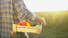 Mężczyzna mienia średniorolny pudełko organicznie warzywa w zmierzchu polu: marchewki, grule, zucchini, pomidory średniorolny ` s zbiory wideo