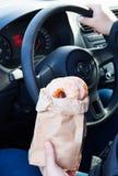 Mężczyzna mienia donuts rzemiosła torby samochód Zdjęcie Stock