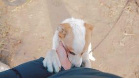 Mężczyzna muska psią głowę zamkniętą w górę osoba widoku mężczyzna muska psa przyjaźń między psem i mężczyzna miłością pet zbiory
