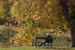 Mężczyzna na ławce w jesieni w Dani obrazy royalty free