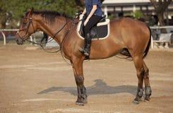 Mężczyzna na konia plecy zdjęcia stock
