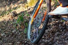 Mężczyzna na rowerze w lesie Zdjęcie Stock