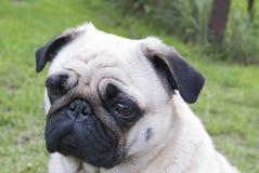 Mężczyzna najlepszy przyjaciel, zwierzę domowe, śmieszny pies, mądry zwierzę, Zdjęcia Royalty Free