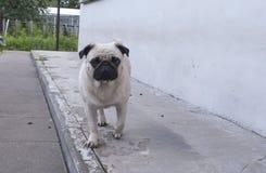 Mężczyzna najlepszy przyjaciel, zwierzę domowe, śmieszny pies, mądry zwierzę, Zdjęcia Stock