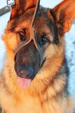Mężczyzna najlepszy przyjaciel, zwierzę domowe, śmieszny pies, mądry zwierzę, Obrazy Royalty Free
