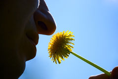 Mężczyzna obwąchania dandelions Fotografia Stock