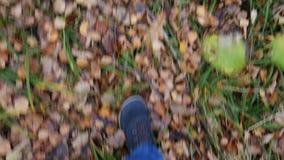 Mężczyzna odprowadzenie na jesień lesie zbiory wideo
