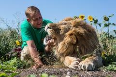 Mężczyzna otwiera szczęki lew w safari parku Taigan, Crimea, Zdjęcia Stock
