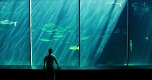 Mężczyzna patrzeje rybiego zbiornika zbiory wideo