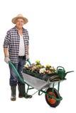 Mężczyzna pcha wheelbarrow z kwiatami obraz royalty free