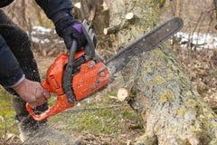Mężczyzna piłuje gałąź szarańczy drzewo z pomarańczowym łańcuszkowym saw dla benzyny czyścić ogród lub parka Obrazy Stock