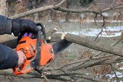 Mężczyzna piłuje gałąź szarańczy drzewo z pomarańczowym łańcuszkowym saw dla benzyny czyścić ogród lub parka Fotografia Stock