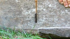 Mężczyzna piłuje kawałek drewno z ręczny stary żelaznym zobaczył zakończenie w górę widoku zdjęcie wideo