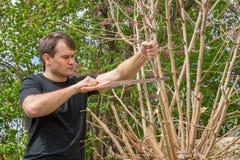 Mężczyzna piłuje z gałąź, tworzy koronę drzewo, przy ich lato chałupą fotografia stock