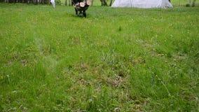Mężczyzna pracownika ogrodowy drewno zdjęcie wideo