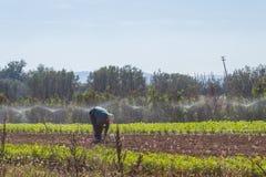 Mężczyzna pracuje w pięknym polu przy Abruzzo Włochy Zdjęcie Stock