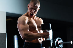 Mężczyzna przy Dumbbell szkoleniem w gym Fotografia Stock