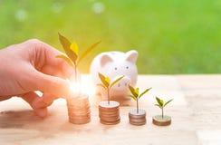 Mężczyzna ręki mienia monety pieniądze pokrywy dorośnięcia roślina i prosiątko bank z pieniądze monetami w oszczędzanie pieniądze Fotografia Stock