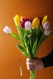 Mężczyzna ręki mienia tulipany Fotografia Stock
