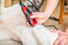 Mężczyzna ręki przygotowywa mieszanego trakenu psa zdjęcia royalty free