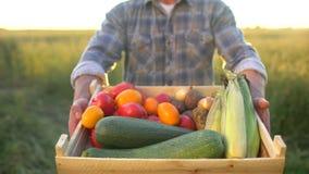 Mężczyzna rolnika seansu pudełko organicznie warzywa w zmierzchu polu: kukurudza, grule, zucchini, pomidory średniorolny ` s ryne zdjęcie wideo