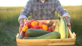 Mężczyzna rolnika seansu pudełko organicznie warzywa w zmierzchu polu: kukurudza, grule, zucchini, pomidory średniorolny ` s ryne zbiory