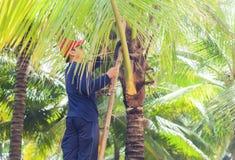 Mężczyzna rozcięcia liście palma Obraz Royalty Free
