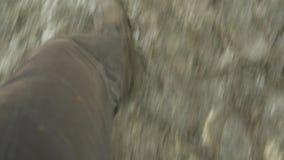 Mężczyzna ` s cieki chodzi przez błota Odgórny widok but na śladzie Samiec nogi W cajgach I Rzemiennych butach Plenerowych samce  zbiory wideo