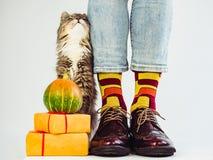 Mężczyzna ` s nogi, śmieszne skarpety i szarość, puszysta figlarka fotografia royalty free