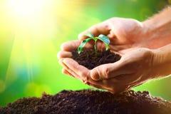 Mężczyzna ` s wręcza zasadzać rozsady w ziemię zdjęcie royalty free