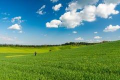 Mężczyzna samotnie w Tuscan krajobrazie z zielonym pszenicznym polem i cyp Obrazy Royalty Free