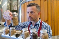 Mężczyzna sprawdza piwo słód w laboratorium zdjęcie royalty free