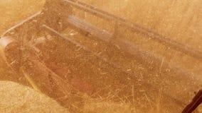 Mężczyzna stylu życia jeżdżenia średniorolny syndykat zbiera na polu z pszenicznym widokiem od syndykata salonu widoku od pierwsz zdjęcie wideo