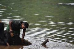 Mężczyzna szczotkuje i myje potomstwa elefant zdjęcia stock